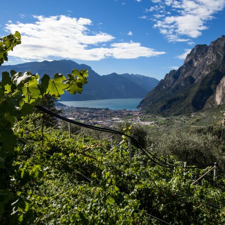 Vineyards and terroir